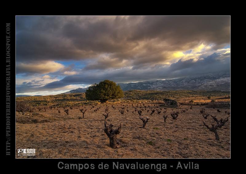 Campos de Navaluenga - Avila