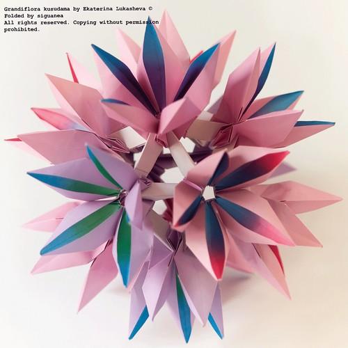 Grandiflora by Ekaterina Lukasheva