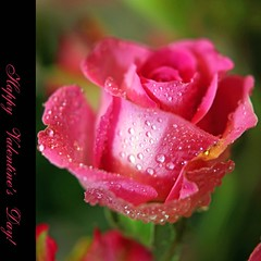 Happy Valentine's day! (JannaPham) Tags: pink flower rose canon happy eos drops valentine happybirthday 5d markii sinhnhat jannapham hoaibao