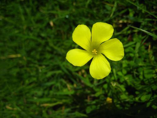 Unknown flower Photo