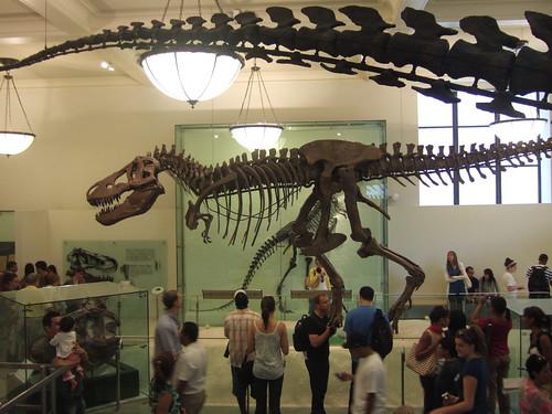 natural history N.Y