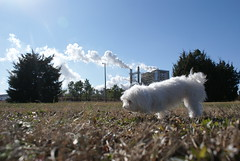 Star and Pollution (GibneyMichael) Tags: star florida pollution maltese unedited cantonment gibneymichael