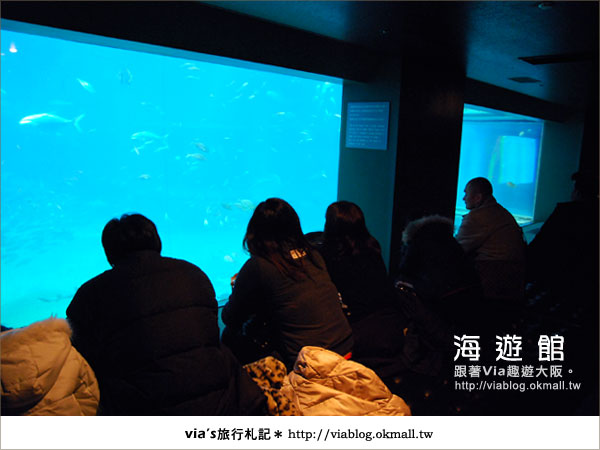 【via關西冬遊記】世界最大極的水族館~大阪海遊館21