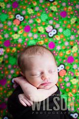 MC (7) (maureenwilson) Tags: baby girl photography naturallight fabric newborn owl 50mmf14g nikond700 maureenwilson mommabroughtit
