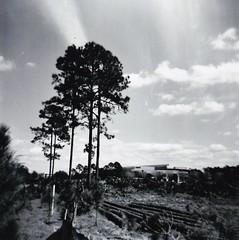 (BeeAreAyeDee) Tags: trees light bw white black 120 film john holga orlando construction exposure florida young down parkway cutting medium format leak lumber 120cfn cfn pkwy