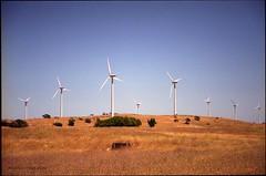 Wind Farm (Adam Dimech) Tags: film windmill field rural iso100 power wind superia farm australia pole electricity environment fujifilm sa southaustralia generation turbine windfarm reala paddock greenpower stobiepole lakebonney tantanoola stobie superiareala lakebonneywindfarm