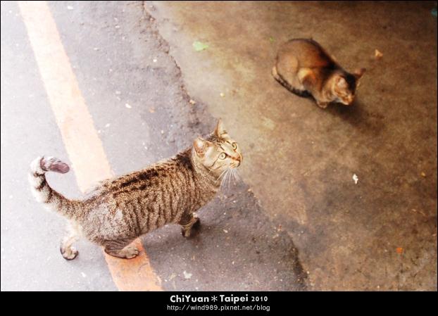 [台北]Cat。艋舺黃昏貓市(萬華東三水街菜市場)