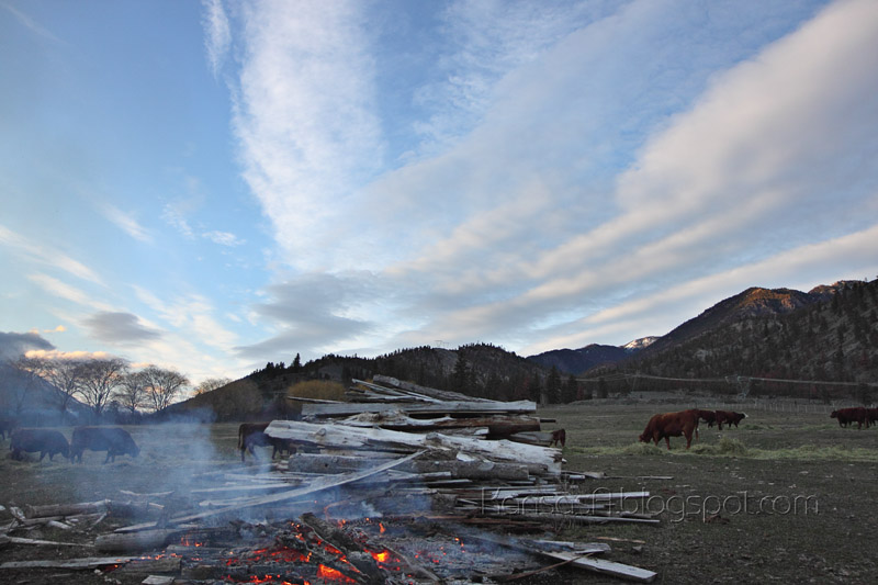Pasture (by KansasA)