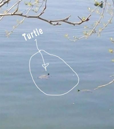 Tutles