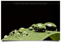 (AnNamir c[_]) Tags: macro canon eos 50mm drops air flash droplet f18 1001nights waterdrops diffuser potofgold 500d titisan macrofilter 580exii diydiffuser ebls annamir puteracom titisanair sahabatsejati getokubicom iluvislamcom mygearandme mygearandmepremium mygearandmebronze mygearandme1 mygearandme2 eblsdiffuser