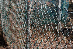 garden fence 042