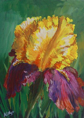 Iris #19