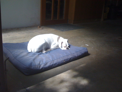 sleeping-dog.jpg