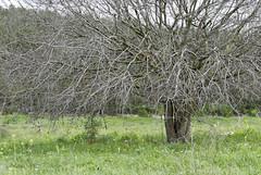 Yoqneam Nature Marsh, Israel (Mark Lukoyanichev) Tags: flowers green nature israel spring flowersnature yoqneam hellmaker יקנעם