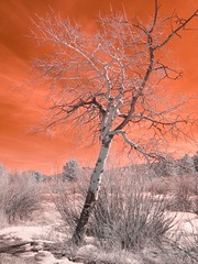 (sandrift) Tags: trees colorado places infrared lightroom 460 stumbleupon rockymtnnatlpark explored