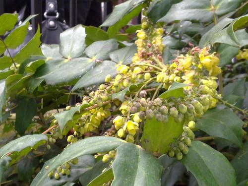 Plant life, taken on N97