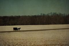 Simply Vintage (SavingMemories) Tags: rural vintage amish textures mennonite backintime buggie horseandbuggie simplyvintage savingmemories usedmar142010takenmar1thru7challengechallengeclub