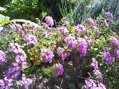 Garden Blooms March 15, 2010 - 4