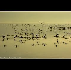 Flamingos at sunset - Nakuru Lake National Park - Kenya (Lucie et Philippe) Tags: voyage africa travel lake nationalpark kenya lac pinkfloyd safari nakuru afrique riftvalley flamantrose