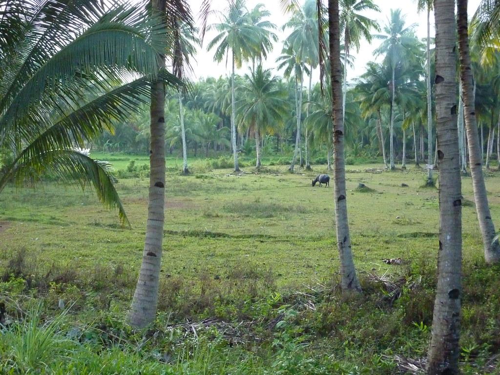 Leyte-Liloan (2)