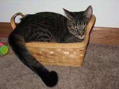 MY BASKET!!!! (Miss a Liss) Tags: cats nikon creative commons whiskers kitties dslr cateyes nikond300
