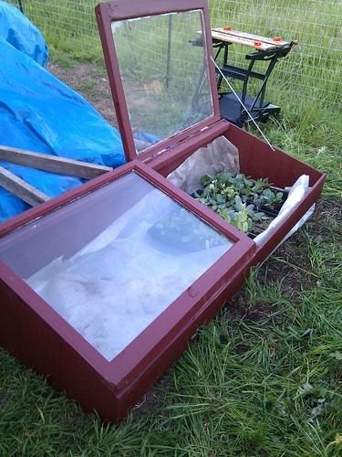 Cold Frame - photo courtesy of Terrim, on Flickr - thanks, Terri!