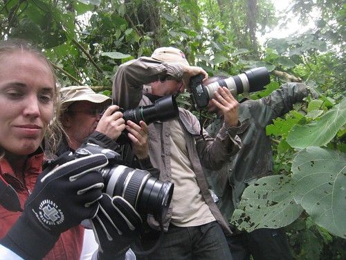 Photo-frenzy in the forest