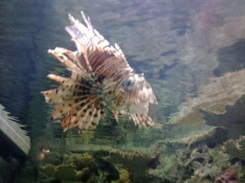 Shrak Reef