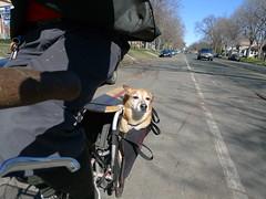 Oscar enjoying the breeze