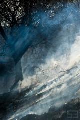 hot smoke (soosbertalan.com) Tags: hot reed fire nikon hungary wind smoke burning burn nikkor dslr fx magyar 135mm gödöllő d700