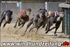 Greyhound-Dogs-280-Sprint-Final