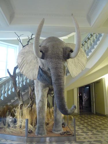 Musée Zoologique d'Helsinki (Finlande)