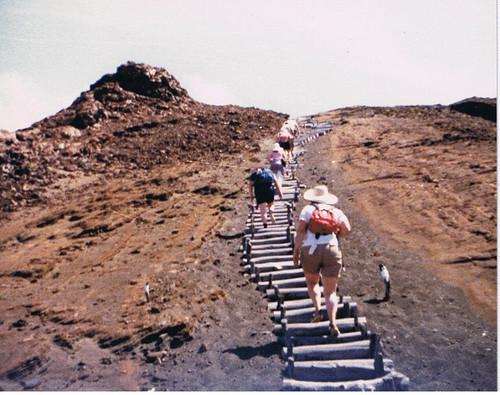 Climbing the Darwin Steps