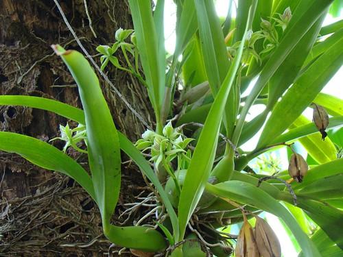 Orquídeas (4)