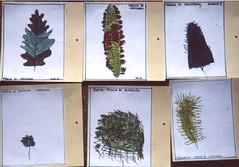 foglie alla sc. infanzia