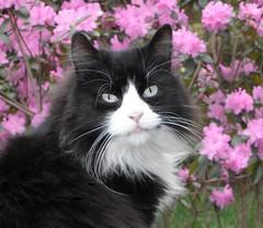 Cute Cat in the Garden (KoolPix) Tags: pet cute animal cat fur feline whiskers cutecat jayd koolpix dailynaturetnc13 wcswebsite photocontesttnc14 dailynaturetnc14
