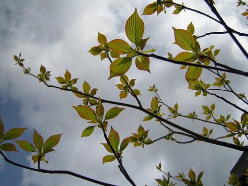 the Zeda tree