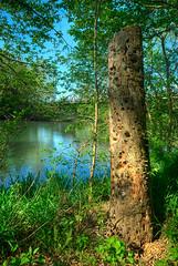 Stump-North-Fork-White-River