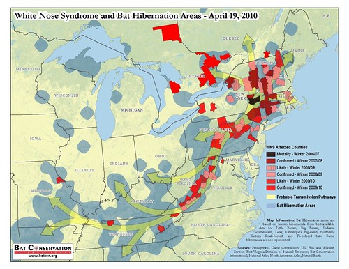 White-Nose Syndrome and Bat Hibernation Areas - April 19, 2010