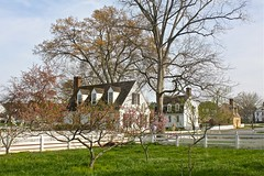 Pretty Orchard (smilla4) Tags: pink house spring orchard picketfence historicsite willamsburgvirginia