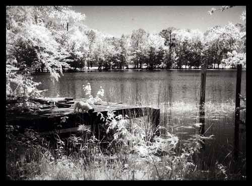 WEB-Free-project-Infrared-Film-Silver-print