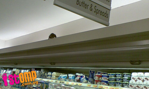 Caught on camera: Rat scurries across supermarket's dairy section