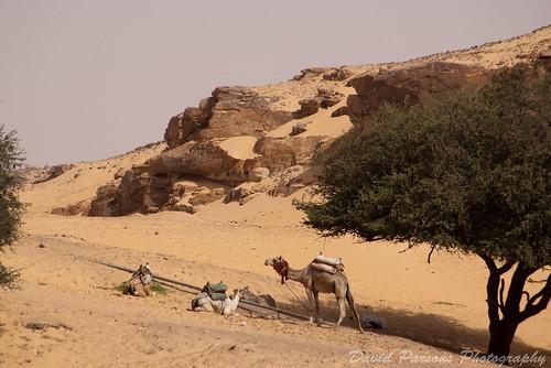 Aswan Felucca ride