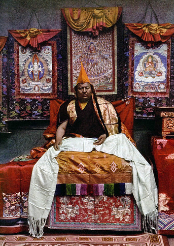 Muli king