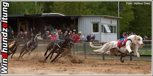Sandbahnmeisterrennen 2010, Münster: 480m Greyhounds gemischt