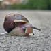 76. A Snail's Pace