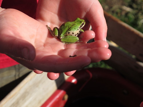 Hot Rod's pet frog