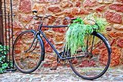 Bicicleta de 1900