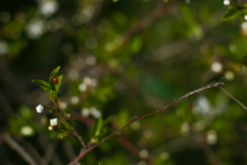 Spring in Alexeevka #4