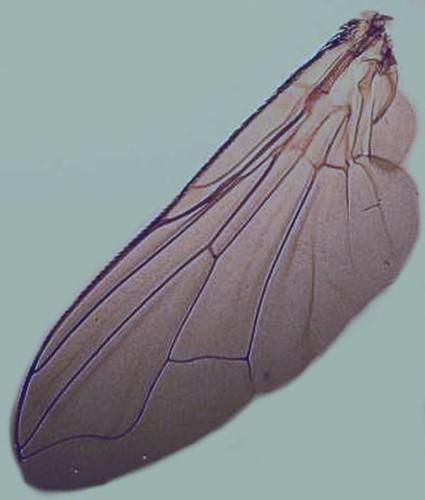 vera wang inspiration insect wing